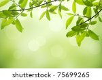 beautiful soft green background ... | Shutterstock . vector #75699265