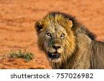 portrait of a strong still... | Shutterstock . vector #757026982