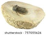 complete pyritised leonaspis ... | Shutterstock . vector #757055626