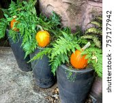 pumpkins lined up in planters... | Shutterstock . vector #757177942