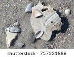 Broken Sand Dollar With Tinny...
