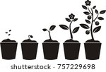plant growing stages. timeline... | Shutterstock .eps vector #757229698