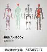 Anatomy Human Body Systems
