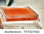 Small photo of Microplate for micropipette used in biochemistry