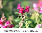 bumblebee approaching dragon... | Shutterstock . vector #757350766