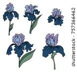 japanese iris flower set.hand...   Shutterstock .eps vector #757366462