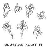 Japanese Iris Flower Set.hand...