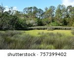 Marshland At St. Augustine ...
