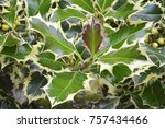 detail  pungitope plant in the... | Shutterstock . vector #757434466
