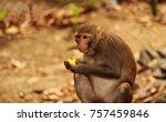 mantis snakes monkey deer... | Shutterstock . vector #757459846