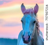Small photo of a portrait of a foal on a ranch