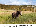 Horses Near Connemara National...
