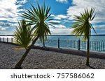Windswept Cabbage Trees On...