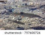 fish under water | Shutterstock . vector #757600726