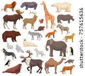 big flat set of wild animals... | Shutterstock . vector #757615636