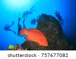 scuba dive on coral reef with... | Shutterstock . vector #757677082
