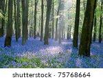 Bluebell Wood  England