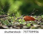 leaf close up fallen to the... | Shutterstock . vector #757709956