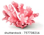 coral isolated on white... | Shutterstock . vector #757738216