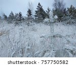 landscape of snow covered pine... | Shutterstock . vector #757750582