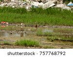 birds in the field of nature. | Shutterstock . vector #757768792