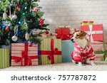 merry christmas. dog jack... | Shutterstock . vector #757787872