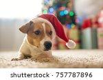 merry christmas. dog jack... | Shutterstock . vector #757787896