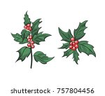 holly branch with beries  ilex... | Shutterstock .eps vector #757804456
