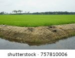 a view of paddy field | Shutterstock . vector #757810006