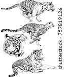 set of vector drawings on the... | Shutterstock .eps vector #757819126