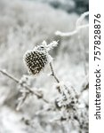 Small photo of Frozen dry burdock/agrimony. Vertical view, close-up, outdoor. Can be used as background