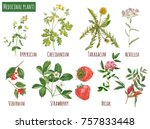set of medicinal plants ... | Shutterstock . vector #757833448