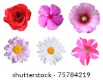 Flowers Isolated Stock Photo