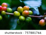coffee beans ripening on coffee ... | Shutterstock . vector #757881766