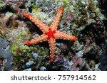 noduled sea star  fromia nodosa ... | Shutterstock . vector #757914562