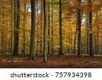 autumn forest  schorfheide ... | Shutterstock . vector #757934398
