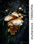 autumn forest. wood mushrooms... | Shutterstock . vector #758002906