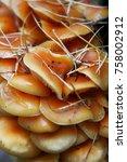 autumn forest. wood mushrooms... | Shutterstock . vector #758002912