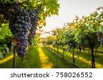 grape harvest in chianti italy   Shutterstock . vector #758026552