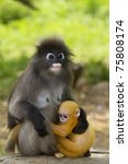 Mother Carrying Baby Monkey