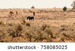 herd grazing 4 south steens hma ...   Shutterstock . vector #758085025