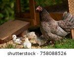 free range chickens in field   Shutterstock . vector #758088526