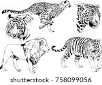set of vector drawings on the... | Shutterstock .eps vector #758099056