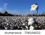 a cotton field ready for... | Shutterstock . vector #758106022