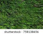 Moss Texture. Moss Background....