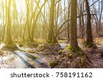 Quiet Spring Forest In A Swamp