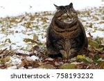 a little fat cat with a funny... | Shutterstock . vector #758193232