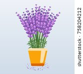 beautiful lavender in pot.... | Shutterstock .eps vector #758204212
