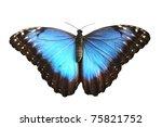 Beautiful Blue Butterfly ...