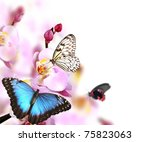 Butterflies On Blossoms Of...